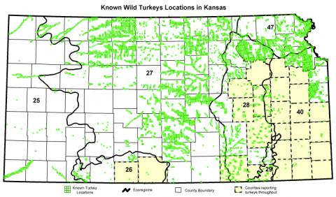 Map of known wild turkey location as reported by a survey of regional experts shown with Omernik level two ecoregions outlined and numbered in bold black.  Inset table shows the numbers of known turkey locations within each ecoregion.  The counties shaded in green simply reported turkeys present throughout and did not provide specific locations.